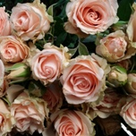 Wedding Senation Roses d'EquateurBranchue  Ethiflora