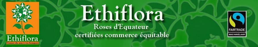 Ethiflora : Roses d'Equateur issues du commerce équitable